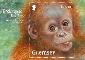 Guernsey-Orang-utan
