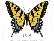 USA Swallowtail 2015