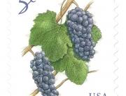 pinot-grape-usps-stamp-l